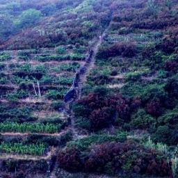 Temporary closure of the Beccara trail #531 between Riomaggiore and Manarola