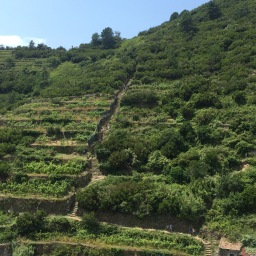 Cinque Terre National Park schedule for guided tours & excursions: August 2016